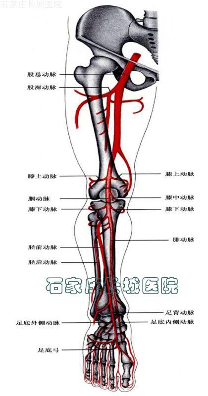 性 下肢 動脈 症 閉塞 硬化